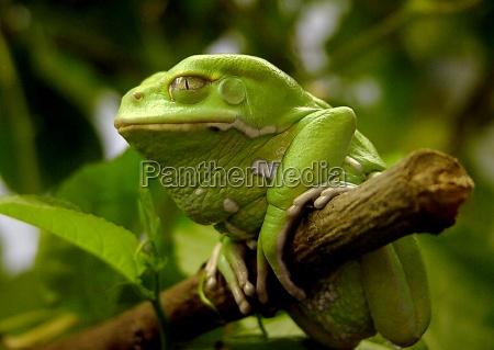 arbol animal verde los animales ver