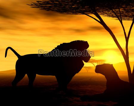 african spirit vi