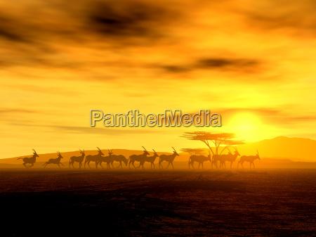 el paseo iii oryx
