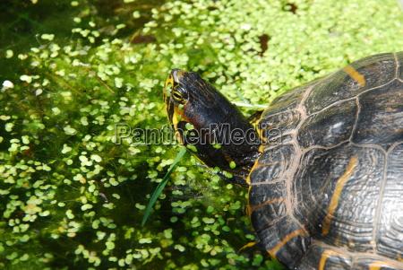 conservacion de la naturaleza biotopo agua