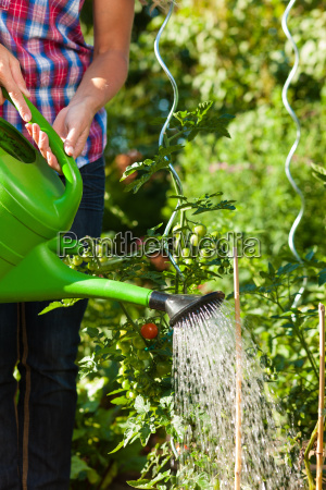 gardening in summer woman watering