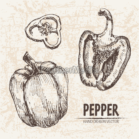 digital vector detailed line art pepper